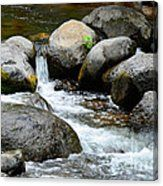 Oak Creek Water And Rocks Canvas Print Oak Creek Canyon Arizona, Sedona Arizona, Rock Artists, Moriarty, Rocks, Canvas Prints, Water, Artwork, Gripe Water