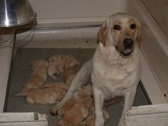 """Duncan is one of those little guys. 3 weeks old. Mom is Mary """"Borador's Quite Contrary"""""""