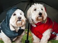 Dog Umbrella – Keep Your Pet Dry in the Rain