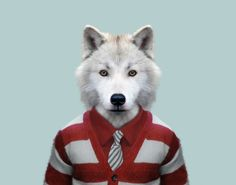 Zoo Portraits, des animaux habillés comme des humains