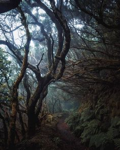 Enchanted Forest uploaded by ⚜Emma Lou⚜ on We Heart It Forest Path, Tree Forest, Tenerife, Enchanted, Magic Places, Vides, Walk In The Woods, Nature Pictures, Belle Photo