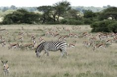 Meno a Kwena Camp - Gondwana Safari Tour Operators Tour Operator, Safari, Wildlife, Camping, Tours, Campsite, Campers, Tent Camping, Rv Camping