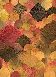Fothergilla by horticultural art, via Flickr. Very cool leaf art with wonderful autumn colors.