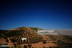 Olive farm at side of road to Pefki village, near Makrigialos,... #pefki: Olive farm at side of road to Pefki village, near… #pefki