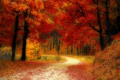 Nature is amazing. Taking pictures of mother nature is indescribable. Here is 30 amazing examples of our beautiful world's nature. Image Nature, Nature Images, Nature Pictures, Sunset Pictures, Leaf Background, Background Images, Halloween En France, Autumn Walks, Autumn Scenery