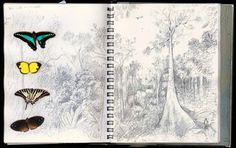 malaysian forest illustration - Google Search