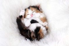 22 chatons endormis qui ne vous aideront pas à vous lever ce matin
