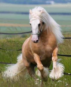 Gypsy Vanner Horses for Sale All The Pretty Horses, Beautiful Horses, Animals Beautiful, Beautiful Gorgeous, Majestic Horse, Majestic Animals, Horse Pictures, Animal Pictures, Animals And Pets