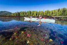 Kayaking tours in Haida Gwaii - award winning Gwaii Haanas Park kayak trips featuring Ninstints totem poles and intertidal marvel of Burnaby Narrows. Charlotte City, Canada Summer, Haida Gwaii, Visa, Sunshine Coast, British Columbia, West Coast, Kayaking, Cruise