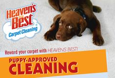 Everyone loves puppies right? No? Well... almost everyone. Get Puppy-Approved carpet cleaning in your home that you, and your furry friends, will love to roll around and play on! Heavens Best Carpet Cleaning- Puppy-approved cleaning!