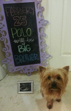 How we shared our news! Pregnancy announcement. Chalkboard. Big brother. Puppy brother.