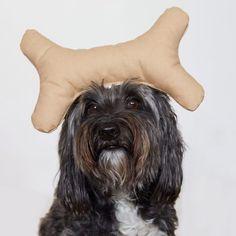 We had a great shot with Pera and Patti Furry play bone. Well done! #pattifurry #bone #dogtoy #cute #weeklyfluff #dogsofinstagram #dogscorner #buzzfeed #interior #petbox #dogsandpals #ilovemydog #mydogiscutest #tibetanterrier #dogoftheday #instadog #petsagram #lovedogs #adorable #dogaccessories