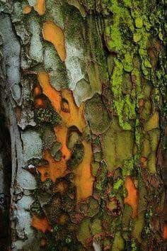 Vivid | Mixed | Color | Colour | цвет | カラー | Couleur | Colore | Texture |