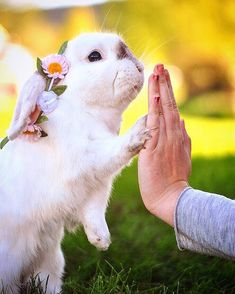 "585 Likes, 4 Comments - rabbit (@rabbit__.__tv) on Instagram: ""High five! From @exempelthebunny ------------------ #rabbits #rabbitsofig #rabbitstagram…"""