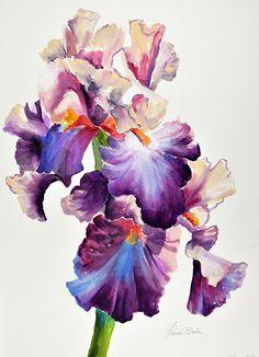 16-15 Two Purple iris by Tanis Bula Watercolor ~ 28 x 21
