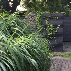 """Susann Larsson on Instagram: """"Så här års, när trädgården ser ut som en enda stor halmbal pga av alla stora gräs, glömmer jag nästan bort hur grönt och härligt det kan…"""" Decks And Porches, Outdoor Rooms, Door Design, Garden Inspiration, Oasis, Vines, Yard, Plants, Painting"""
