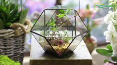 geometric  terrariums Terrarium Containers, Glass Terrarium, Terrariums, Planter Ideas, Ceramic Planters, Floating Frame, Classic Elegance, Artificial Plants, Garden Planters