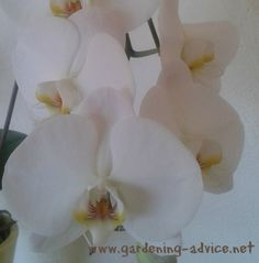 Caring For Orchids Made Easy!