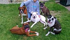 Crazy Boxer Lady!!!!! Northern Plains Boxer Rescue www.everyboxercounts.com #fosteringsaveslives
