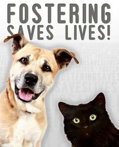 Please foster dogs and cats.