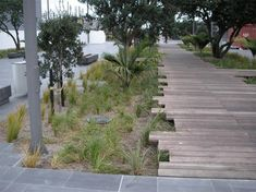 Jellicoe Street, Auckland, NZ Client: Waterfront Auckland. DesignFlow developed a WSUD strategy and designs for stormwater treatment and public enjoyment along the premier waterfront boulevard and park in Auckland's Harbour precinct. The project involved using constructed wetlands as a linkage between terrestrial and marine environments. In addition raingardens are used along the boulevard to create generous green spaces that help to reclaim the former industrial area for pedestrians.