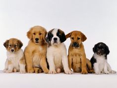 Cachorros, descubre qué cuidados precisan: http://wakan.org/cachorros-un-nuevo-miembro-en-la-familia/