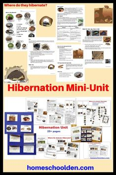 This Hibernation Mini-Unit is more than 25 pages and covers: why animals hibernate, terms such as torpor, brumation, estivation, diapause, endotherms vs. ectotherms, where animals hibernate and spend the winter, as well as the dangers of hibernation. #HibernationUnit #WinterUnit #HibernationWorksheets #HomeschoolCurriculum Homeschool Science Curriculum, Science Notebooks, Unit Studies, Hands On Activities, Den, Worksheets, Christmas Holidays, Thanksgiving, The Unit