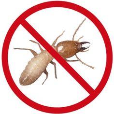 #Pest #control #services in #Bangalore, #Pest #Control #Bangalore http://www.gapoon.com/pest-control-services-bangalore