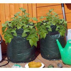 Aardappel kweekzak groen -