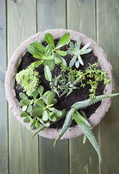 Cómo hacer un jardín de suculentas en una maceta...
