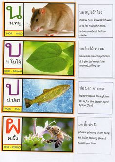 Thai Alphabet Song Lyrics page7