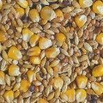 Alimentation pour vos poules: Comment bien nourriture vos poules pour obtenir de beaux oeufs? Chicken Pop, Permaculture, Agriculture, Gardening Tips, Vegetables, Guide, Food, Couture, Flowers