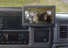 Horse Trailer Monitor.. Yes!! Def want one!