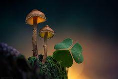 El Fotógrafo Martin Pfister Ilumina Las Setas Para Convertirlas En Imágenes De Cuento De Hadas