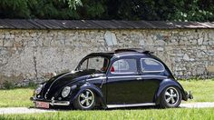 Black ragtop oval beetle