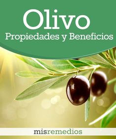 ¿Sabías que ya desde la antigüedad, del olivo se aprovechaba desde su madera hasta sus frutos, también por sus propiedades curativas? Es bueno en casos de presión arterial alta, para el colesterol, para el estreñimiento, para bajar la fiebre, y para