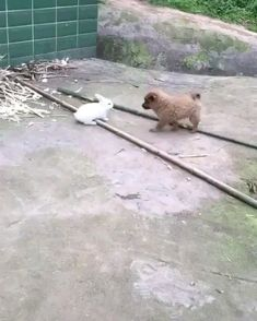 Brave bunny fights off puppy Baby Animals Super Cute, Cute Little Animals, Cute Funny Animals, Cute Cats, Cute Animal Videos, Funny Animal Pictures, Animal Antics, Animal Memes, Funny Dog Videos
