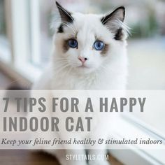 How to keep indoor cats happy and stimulated