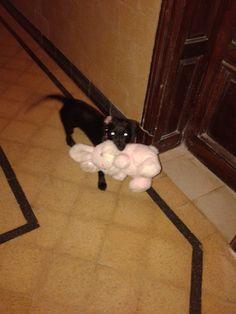 #Coquita Con su nuevo peluche