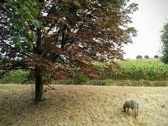 Dit beeld heeft iets bijbels... #photography #travelphotography #traveller #canonnederland #canon_photos #fotocursus #fotoreis #travelblog #reizen #reisjournalist #travelwriter#fotoworkshop #willemlaros.nl #reisfotografie #fb #tw