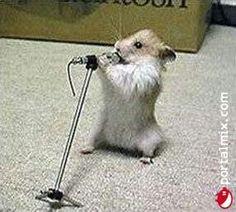 Canta # ratonsito # mouse
