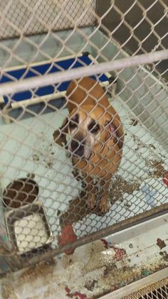 Susie Q may be on death row because of her owner's boyfriend who just didn't like her; the dog was just too old and too slow. Found wandering in the streets in Pasco County, Florida, the dog's microchip led the shelter back to her owner. When contacted, the woman told shelter workers she didn't want …