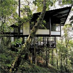 Risultati immagini per come progettare clima tropicale