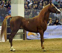 Persano horse - Wikipedia, the free encyclopedia