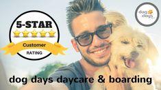 Luxury Dog Boarding Near Me Can Dogs Eat Apples, Dog Comparison, Dog Training Near Me, Dog Boarding Near Me, Dog Insurance, Guide Dog, Dog Daycare