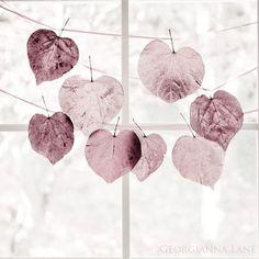 Antique rose (theme) by Georgianna Lane