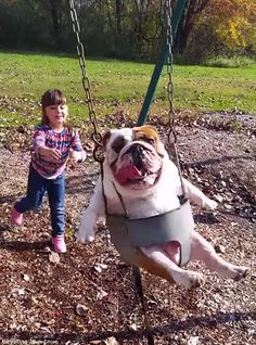 Weeeee: Sophie Citron, 5, pushes her pet bulldog Ozzy on a swing in Kingston, New York ...