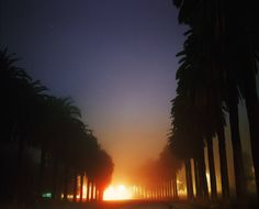 "Night Landscapes Photography by Amanda Friedman  The shapes of palm trees in the dark moonlight and fuzzy street lamps lights a silhouette that sinks to the horizon seem to be subjects of predilection of photographer Amanda Friedman. From town to town she captures the mysterious atmosphere of nocturnal landscapes to discover.  [caption id=""attachment_763699"" align=""alignnone"" width=""900""] 55324_H21                             #xemtvhay"
