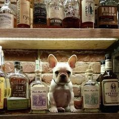 I'll have a shot of whisky, and that adorable little gremlin on the bottom shelf… http: