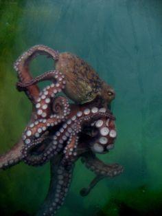 sea life - sea life photography - sea life underwater - sea life artwork - sea life watercolor sea l Kraken Octopus, Octopus Squid, Octopus Art, Octopus Painting, Octopus Drawing, Octopus Design, Octopus Photography, Animal Photography, Especie Animal